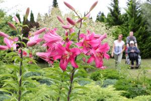 Terapia ogrodnicza